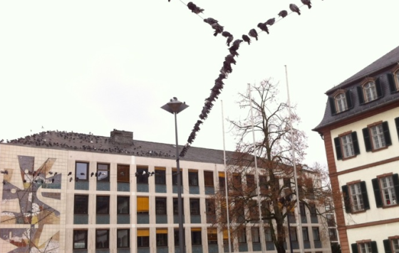 Tauben Luisenplatz 2012-12-22